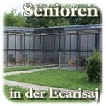 windhunde in not flensburg